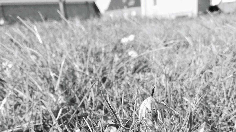 Блог Listen to your broccoli Весна